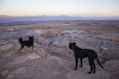 Dogs watch the sunset over the Valle de la Luna in the Atacama Desert
