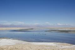 Salt pans of Laguna Chaxa, Atacama Desert