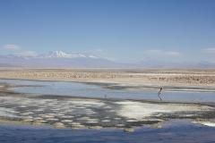 Flamingos in Laguna Chaxa, Atacama Desert