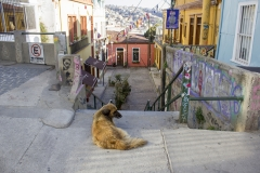 Dog chills in Valparaíso's old quarter
