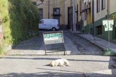 A sleepy dog in Valparaíso