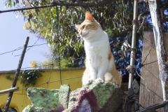 A supermodel cat in Valparaíso