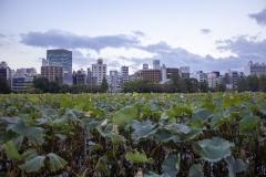 Tokyo as seen from Shinobazu Pond, Taito, Tokyo