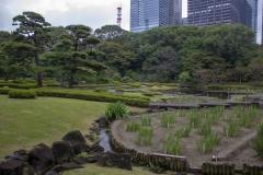 Imperial Palace gardens, Chiyoda, Tokyo