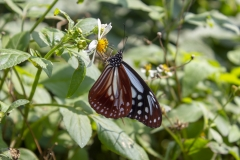 Butterfly in Yehliu Geopark
