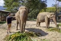 Elephant Nature Park, Thailand