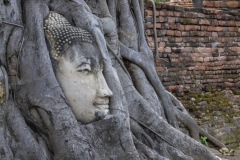 Buddha head encased in tree roots at Wat Mahathat, Ayutthaya, Thailand