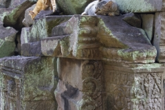 Cats at Preah Khan Temple, Angkor complex, Cambodia