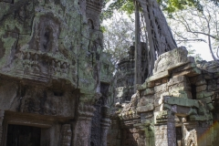 The ruins of Ta Prohm Temple, Angkor complex, Cambodia